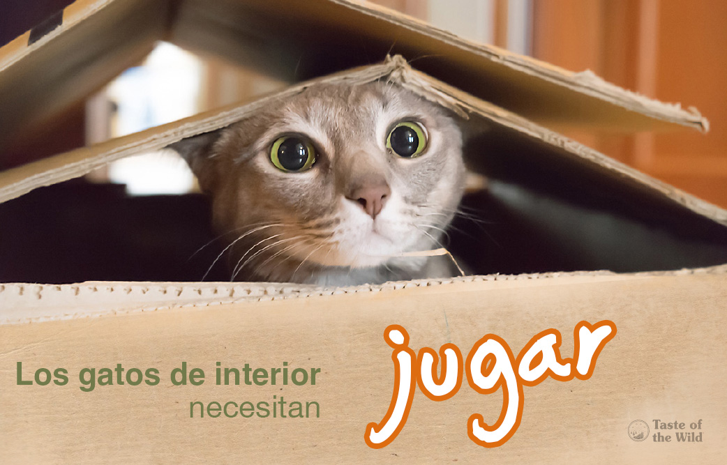 gatos de interior