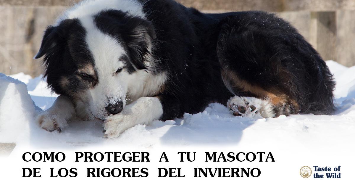 proteger a la mascota del frio