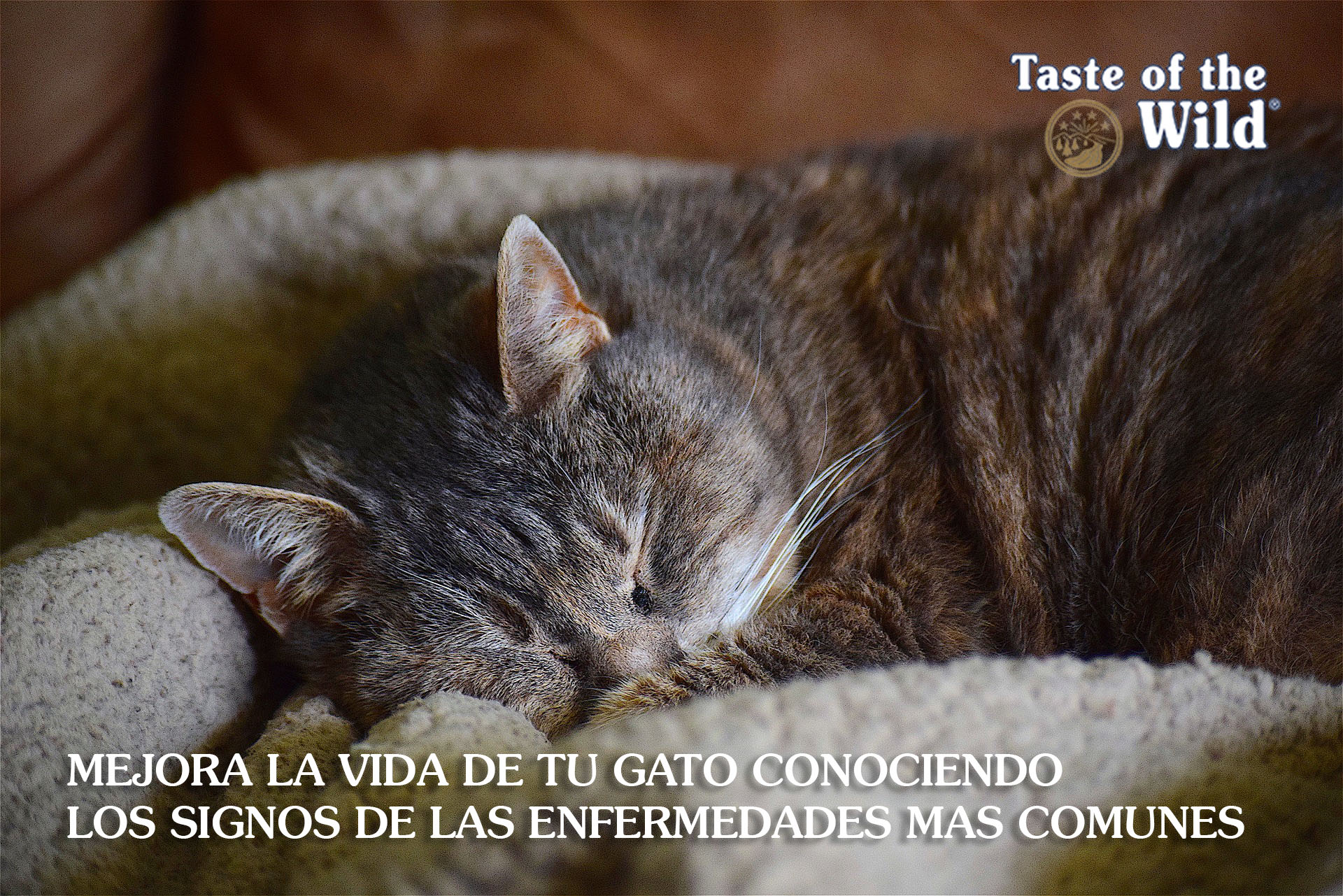 enfermedades gatos