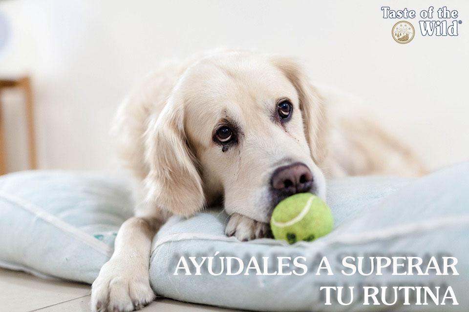 Vuelta a la rutina perros - Taste of the Wild España