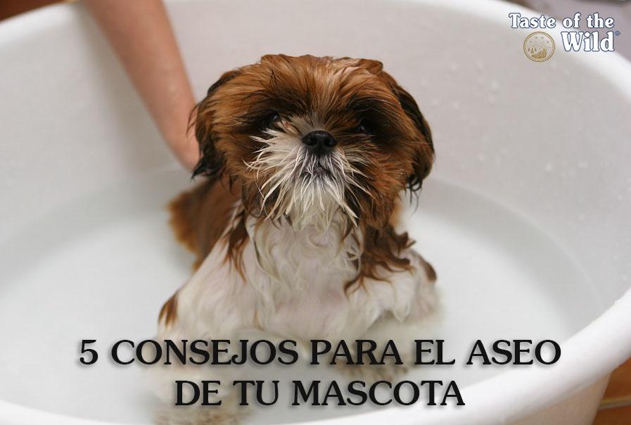 Consejos aseo de mascota - Taste of the Wild España