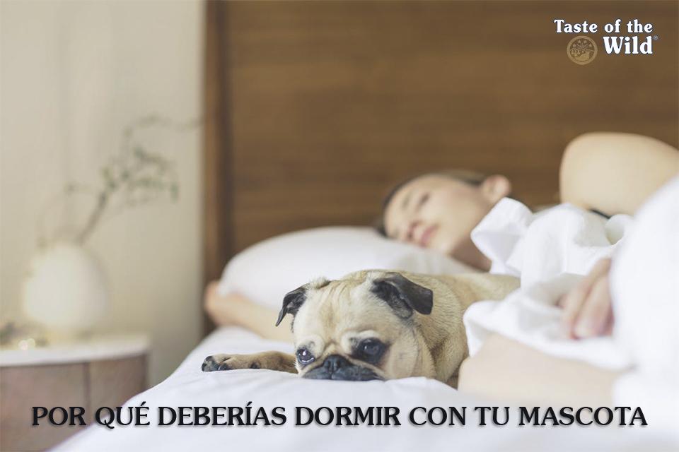 Dormir Mascota - Taste of the Wild