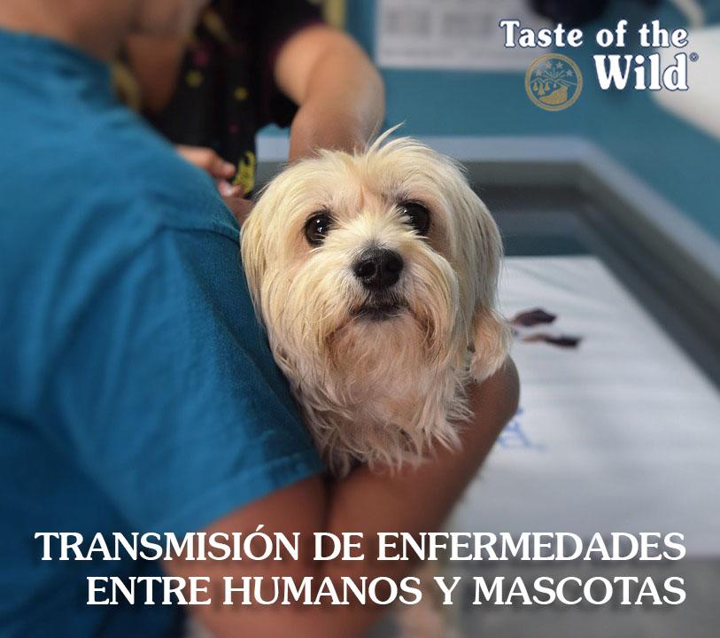 Transmisión enfermedades humanos mascotas - Taste of the Wild España