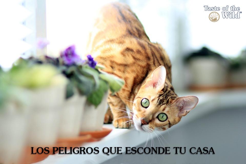 Casa segura para tu gato (Taste ot the Wild España)