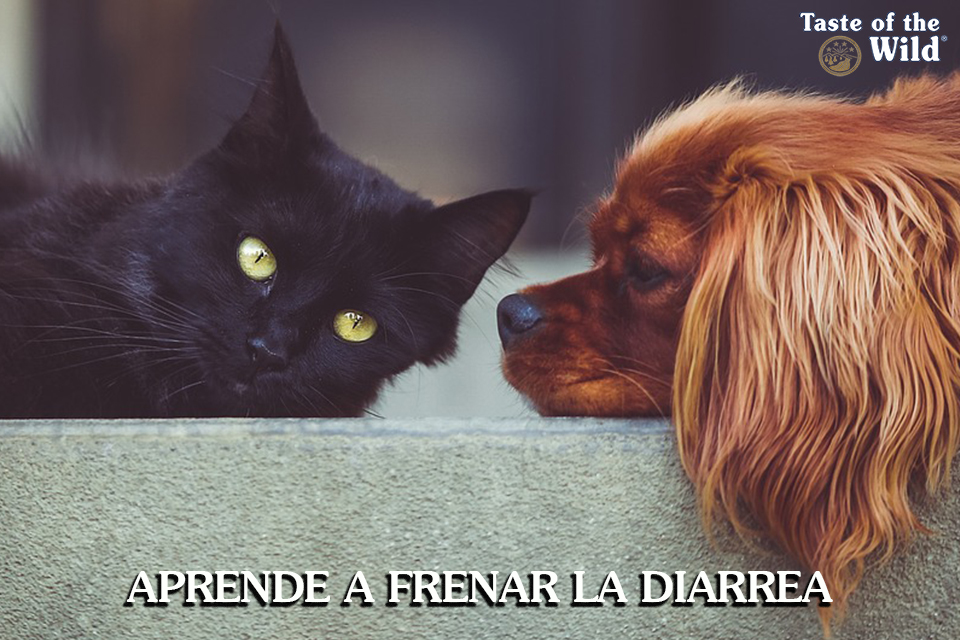 Diarrea Perros Gatos Taste of the Wild