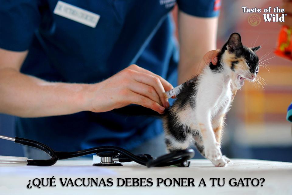 La vacunación en los gatos
