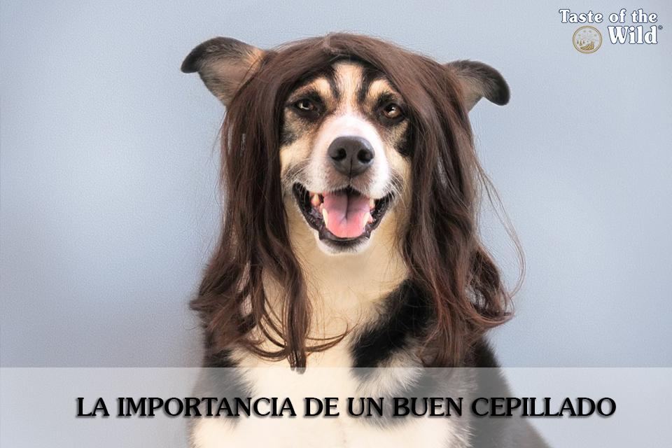 Un cepillado adecuado es imprescindible para garantizar una adecuada salud e higiene de nuestro perro.