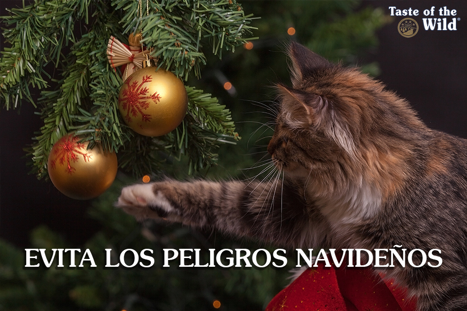 Evita los peligros del Navidad para tu mascota