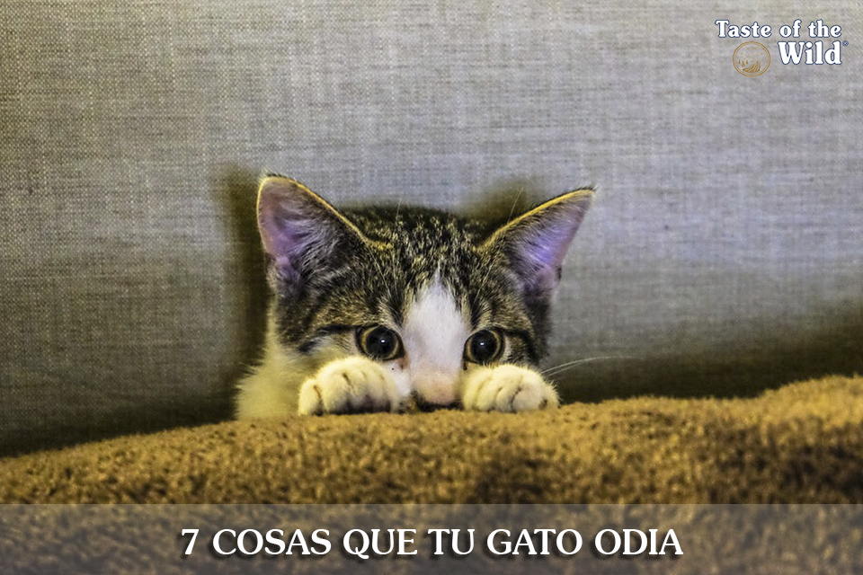Gato_Odia_Taste_of_the_Wild