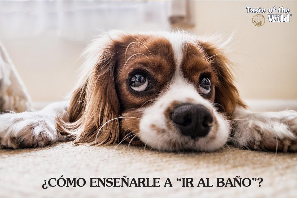 Perro ir al baño - Taste of the Wild España
